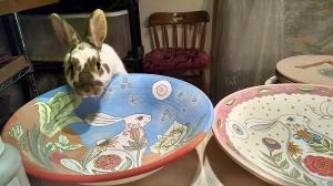 Tang looking at rabbit